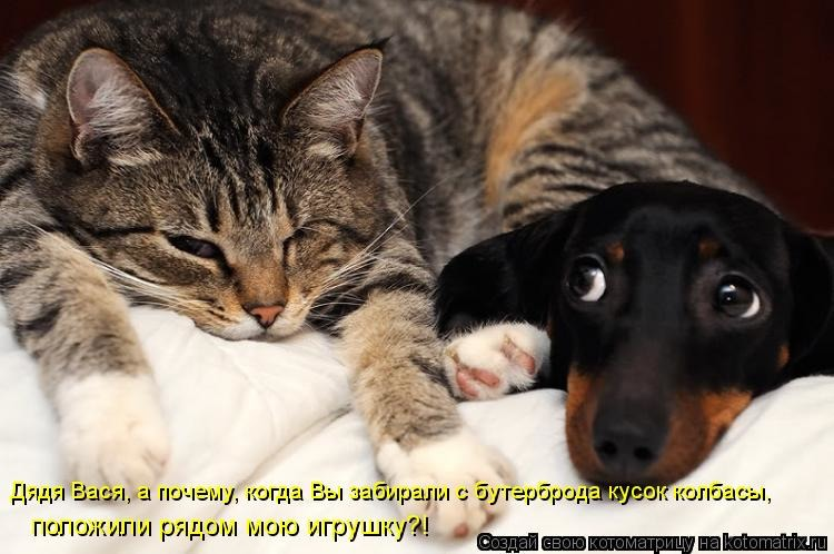 Картинки котят и щенков с надписями, рамка