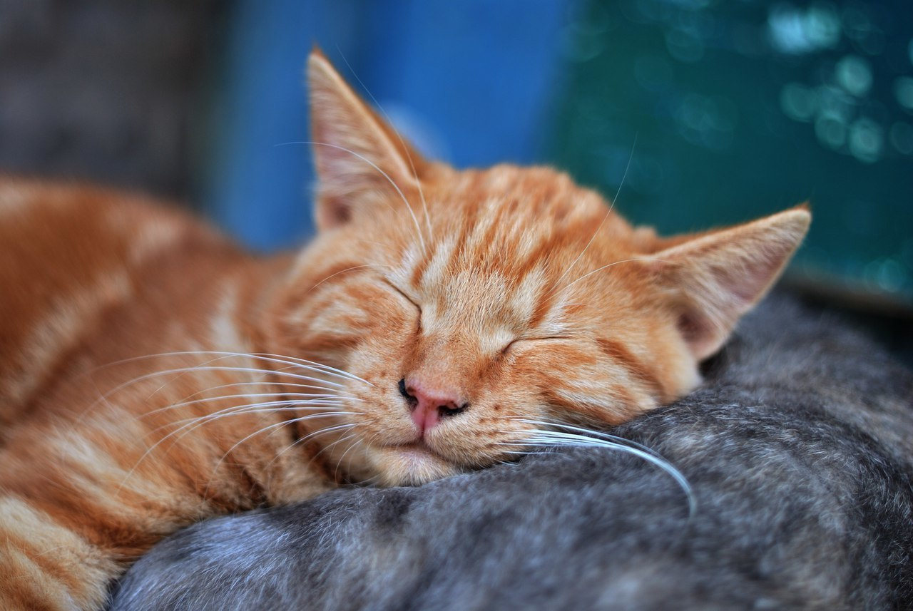 free spay and neuter clinics for cats near me