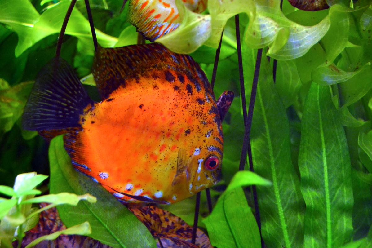 6. Красивые разноцветные аквариумные рыбки.