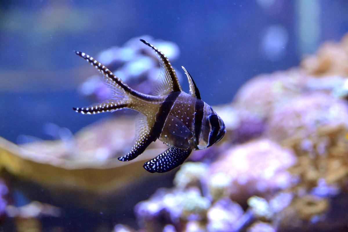 11. Еще одна рыбка