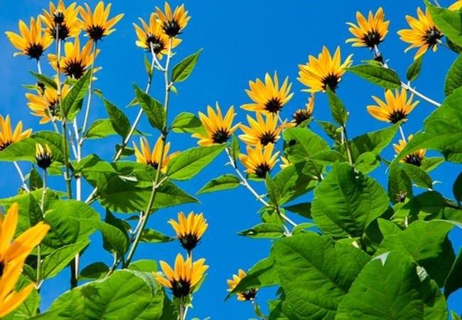 Листья облепихи - полезные свойства и противопоказания, листья груши полезные свойства и противопоказания.